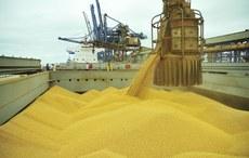 Soja em grão e milho puxam as vendas externas de agosto