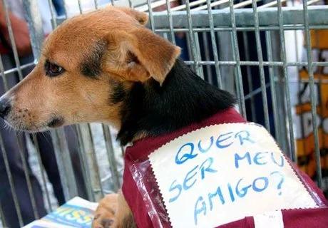 Dia do Amigo PET acontece no próximo sábado em Arapiraca