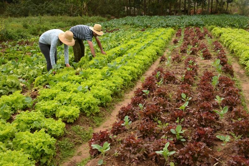 Agropecuária perde mais de 21 mil empregos formais em novembro