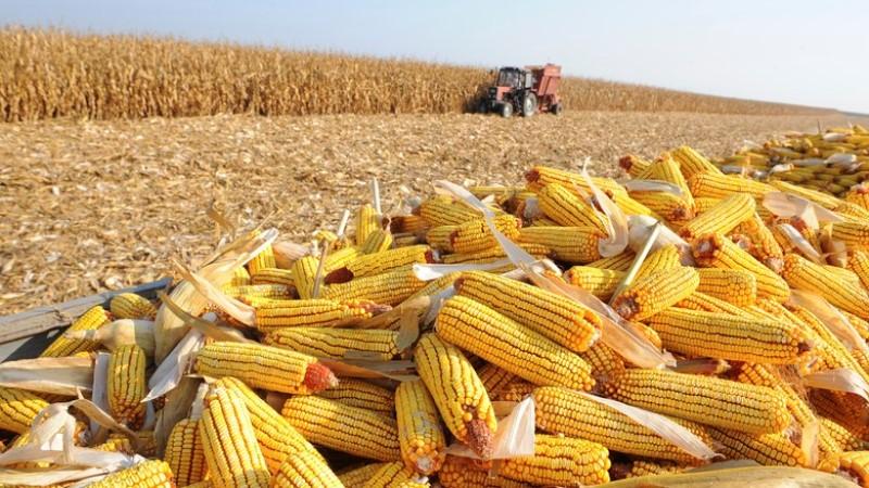 VBP agropecuária deve alcançar recorde em 2020, diz CNA