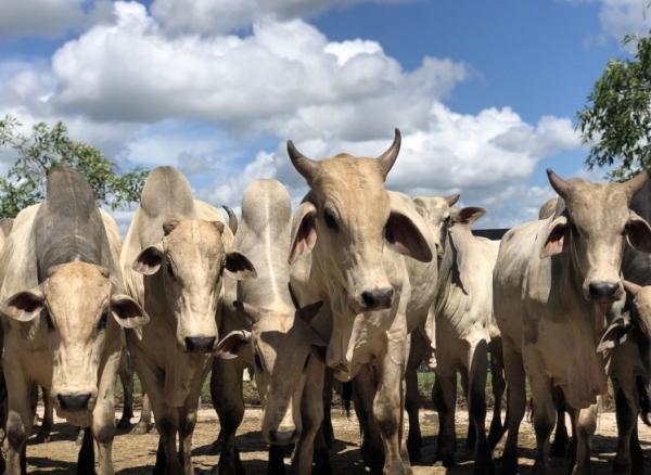 AL inicia Campanha de Vacinação contra a Raiva Animal nesta quarta (24)