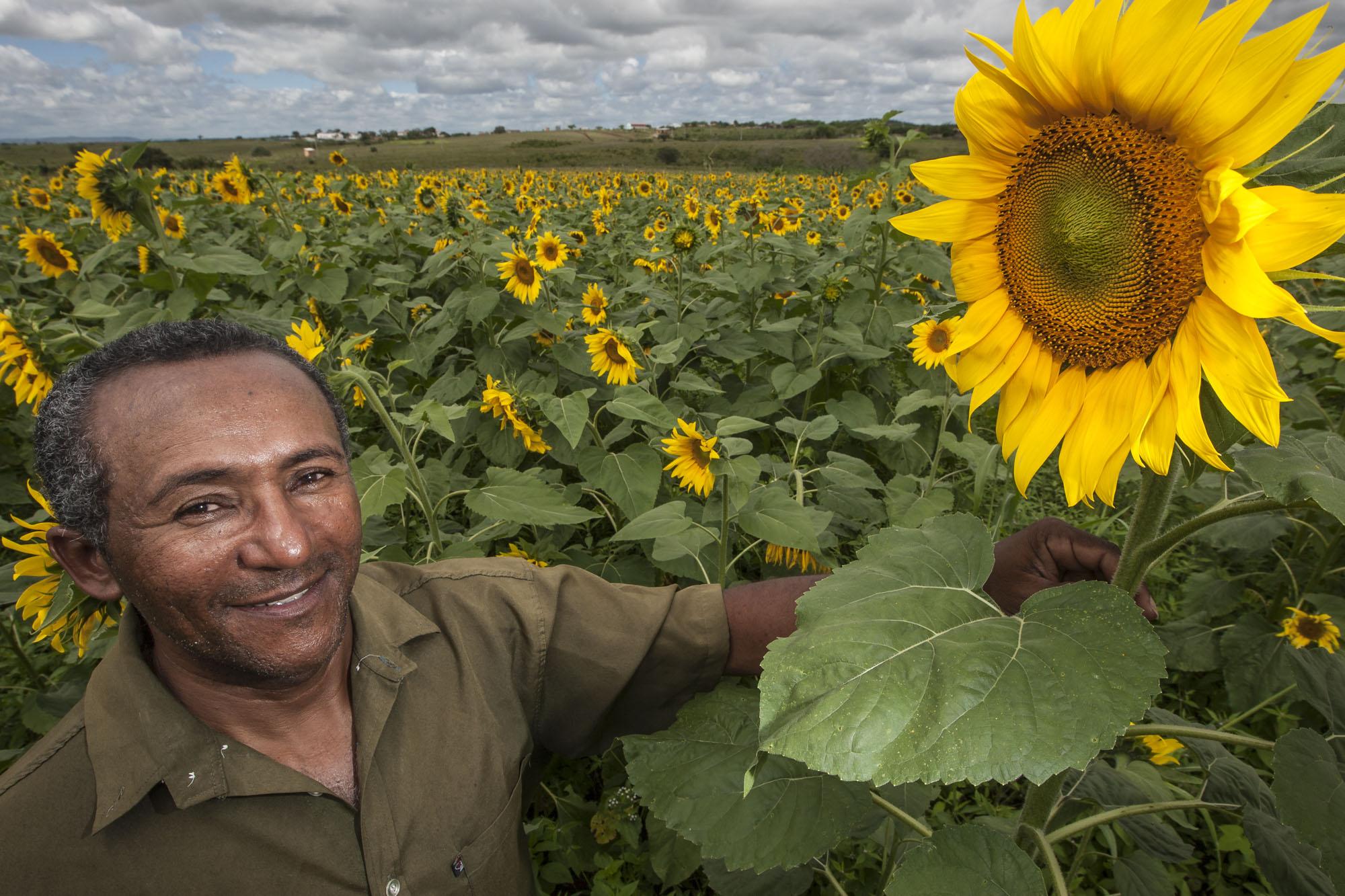 Selo Combustível Social: 40 mil produtores cooperados serão beneficiados