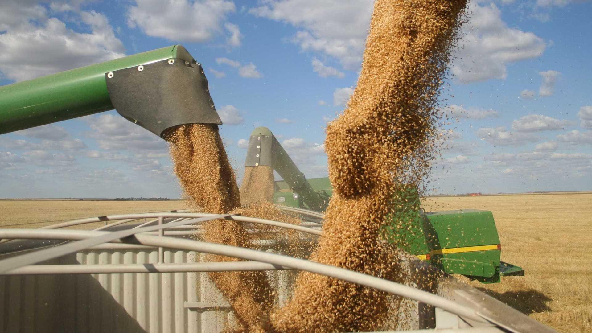 Algodão, soja e café avançam e seguram perdas do agronegócio