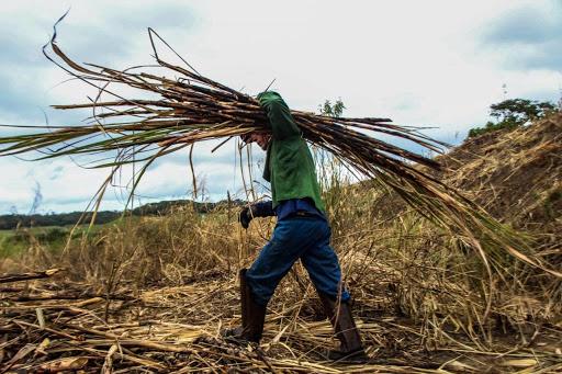 Produção agropecuária de Alagoas soma R$ 2,8 bilhões em 2020