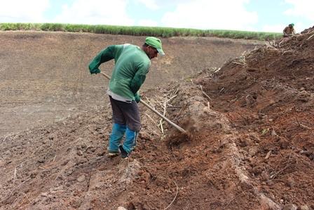 Chuva ajuda no plantio de cana em áreas de encostas