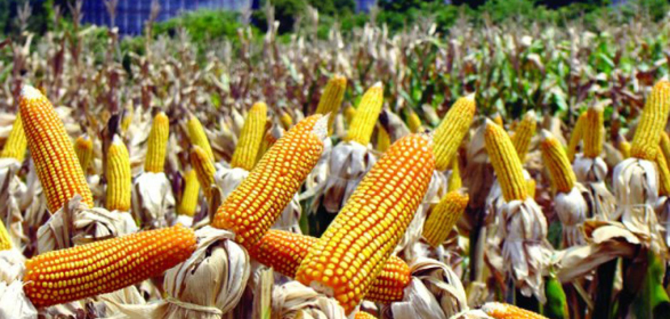No último ano agronegócio brasileiro exportou US$ 96,8 bilhões