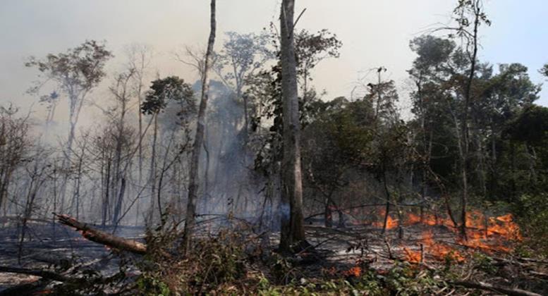 Conselho anuncia operação em áreas protegidas da Amazônia Legal