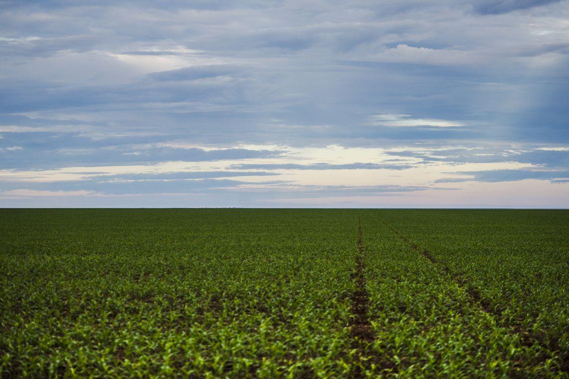 Marco regulatório para agrotóxicos é publicado no DOU