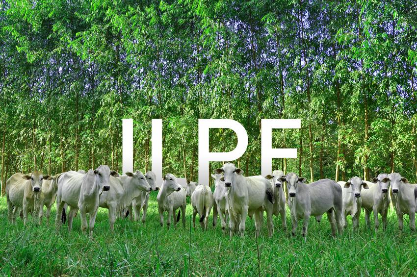 Embrapa divulga avaliação econômica do ILPF