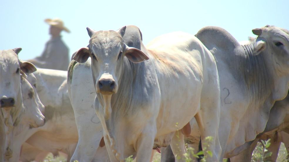 ACA aposta em 2020 de crescimento da pecuária