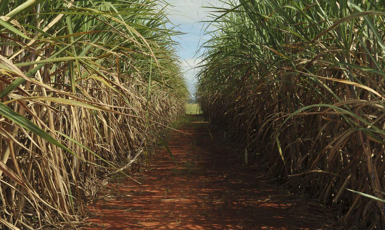 NE terá ampliada a cota americana de exportação de açúcar