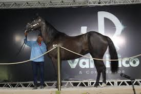 Leilão Vale Rico abre pré-lance nesta sexta (25)